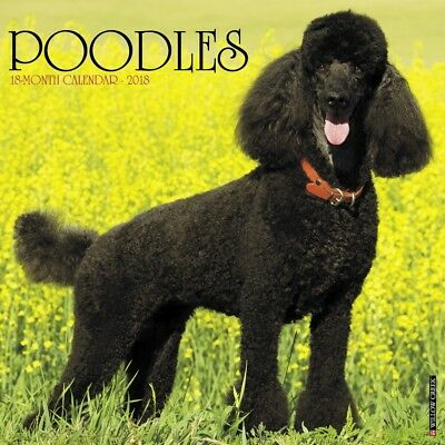 2018 Just Poodles Wall Calendar,  Poodles by Willow Creek Press