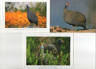 3  postcard of CROWNED CRANE BIRDS