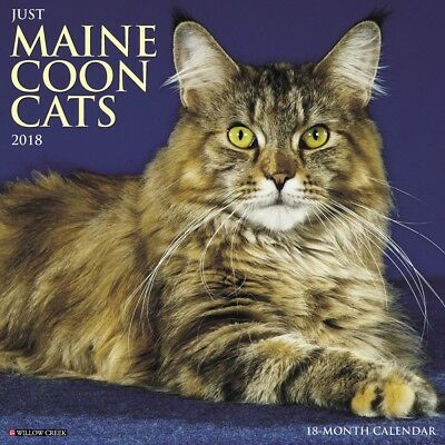 2018 Just Maine Coon Cats Wall Calendar,  Cat Breeds by Willow Creek Press