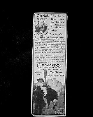 1907 Trade Ad=CAWSTON OSTRICH FEATHERS direct from CA Farm=South Pasadena-CA