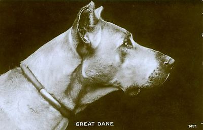 Vintage Photo Postcard PC Great Dane Dog Printed in Saxony Germany ALPHA c1940s