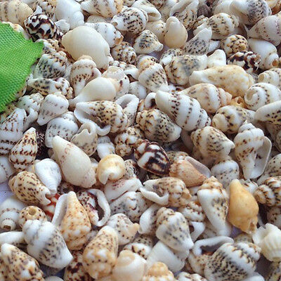 50g Mixed Tropical Natural Sea Shell Conch For Wedding Fish Tank Landscape Decor