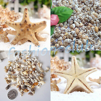 Wholesale Natural Starfish Conch Shell Miniature Wedding Craft Ornaments Décor