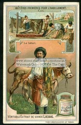Cattle Cows Leather Tanning Hides Pelts Skins 1907 Trade Ad Card