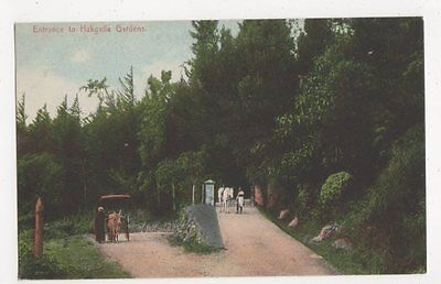 Ceylon, Entrance to Hakgalla Gardens Postcard, B239