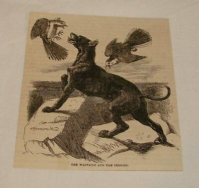 1877 magazine engraving ~ WAGTAILS AND THE TERRIER