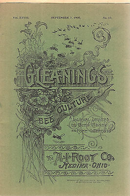 Gleanings in Bee Culture Sep 1900 Beekeeping Beekeepers AI Root Co Magazine