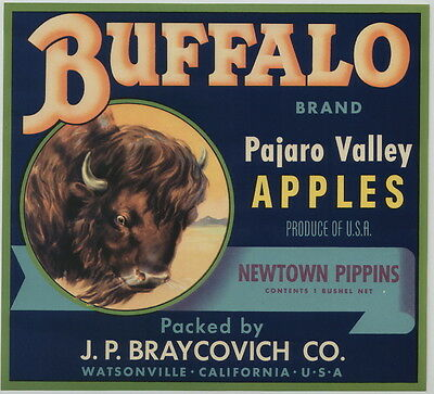 BUFFALO Vintage Watsonville Apple Crate Label, Bison, Western, AN ORIGINAL LABEL