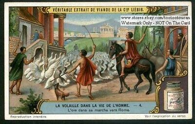 Ancient Romans Taking Geese To Market 1920s Trade Ad Card