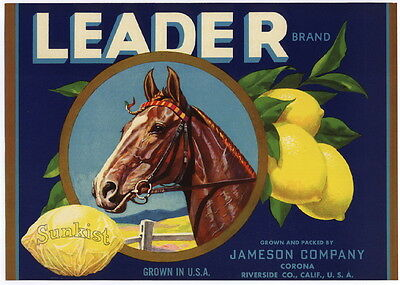 LEADER Vintage Riverside Lemon Crate Label, Race Horse, AN ORIGINAL CITRUS LABEL
