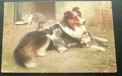 Postcard : Scotch Collie Dog with Kittens and Cat : Cute Card : Posted 1914