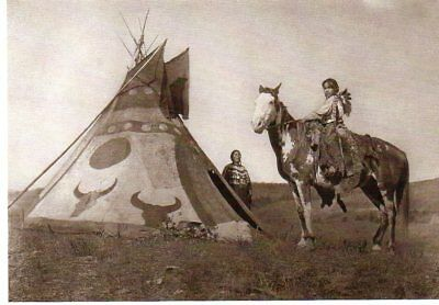 postcard of AMERICAN INDIANS HORSE & TIPI ASSINBOIN