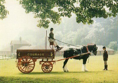 postcard of NAMED COURAGE SHIRE HORSE  & DRAY - MAJOR