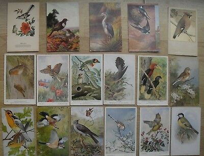 17 vintage postcards of Birds - Winifred Austen British Museum Natural History