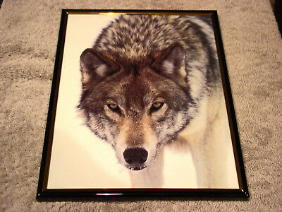 Wolf 8X10 Framed Picture #3