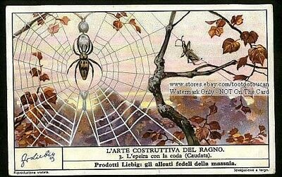 Arachnid Spiders  Three 1930s Trade Ad Cards