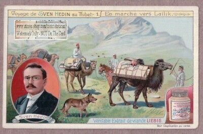 Hedin Expedition Camel Caravan To Lailik Yarkand-daria Sweden c1909 Trade Card