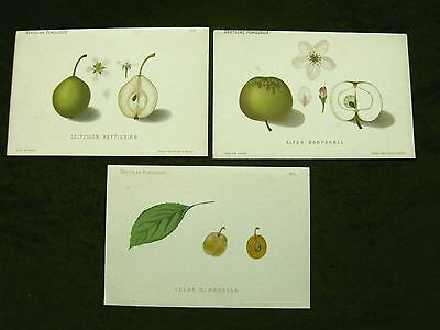 Apfel Birne Mirabelle,  Apple Pear Mirabelle, 3 Farblithographien ca. 1880