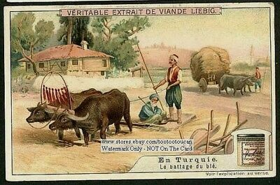 Turkey Plowing Wheat With Ox Farming 1910 Trade Ad Card