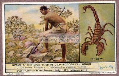 Scorpion Insects Of African Congo Stinging Poison c50 Y/O Vintage Trade Ad Card