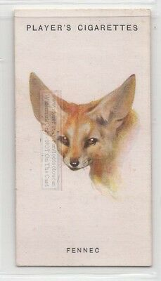 Fennic Fox 85+ Y/O Ad Trade Card