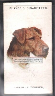 Airedale Terrier Dog 75+ Y/O Ad Trade Card