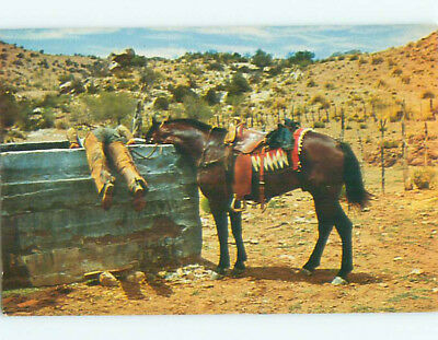 Pre-1980 western COWBOY AND HIS HORSE DRINK FROM THE SAME TROUGH k8488
