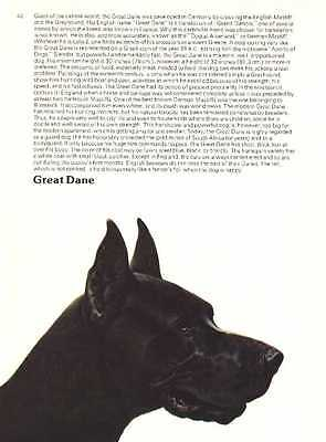 Great Dane - Vintage Dog Print - 1976 Cozzaglio
