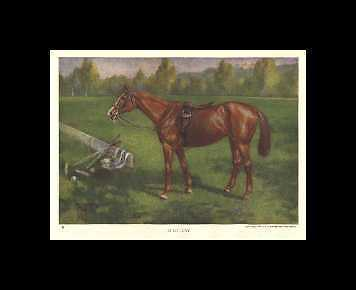 Polo Pony - 1923 Vintage Horse Print - Matted