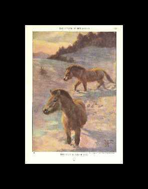 Wild Asian - 1923 Vintage Horse Print - Matted