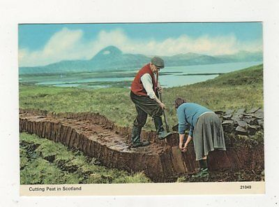 Cutting Peat In Scotland Postcard 699a