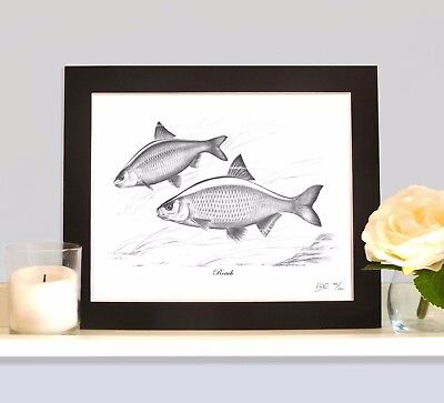 ROACH Fishing Fish Art Print Picture MOUNTED Present For Roach Angler Fisherman