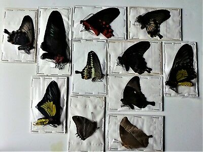 LEPIDOPTERA: Mixed x 11 butterflies from Tanzania and the philippines