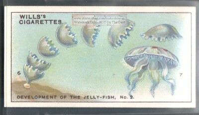 How Jellyfish Develop TWO c90 Y/O Trade Ad Cards