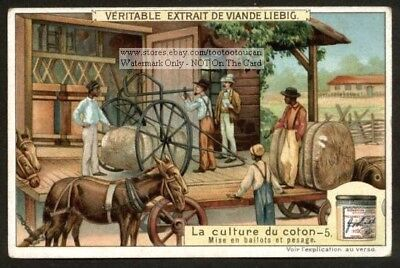 Black Americans Loading Cotton Wagon c1910 Trade Ad  Card