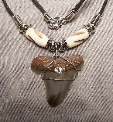 "1 3/16"" Angustiden Shark Tooth Teeth Necklace Fossil Jaw Megalodon Fishing"
