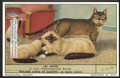 Abyssinian Cat and Birman Cat  Chat c60  Y/O Trade Ad Card