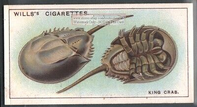 Giant Crab of Japan c90 Y/O Trade Ad Card