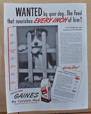 1945 magazine ad for Gaines Dog Food - cute Airedale puppy, for his happiness