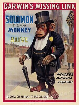 """Solomon the Man Monkey"" Pickards Museum 1908 Circus Display Poster - 20x28"