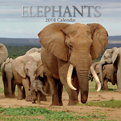 Elephants ~ 16 Month  2018 Square Wall Calendar