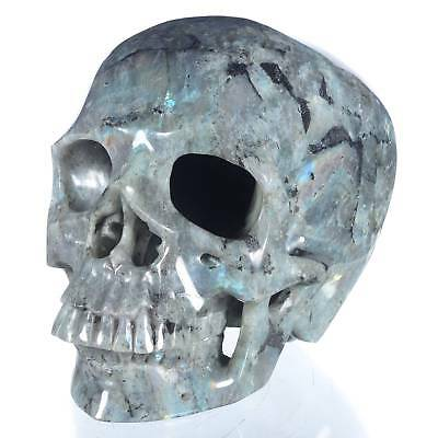 """8.98"""" Natural Labradorite Hand Carved Container skull/ Head,collectibles#24K22"""
