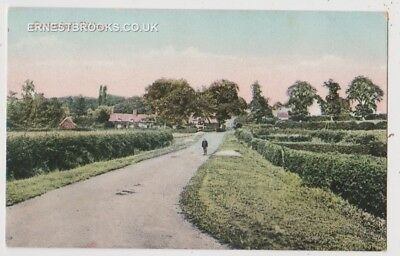 Early Postcard,Bedfordshire,Pertenhall Village, Houses In Distance, Man Outside,