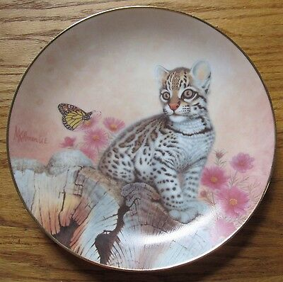 "Native Wildlife Kittens Ocelot 8.5"" Collector's Plate by Murray Killman  U. E."