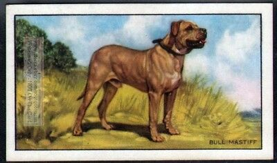 Bullmastiff Bull Mastiff Dog 75+ Y/O Ad Trade Card