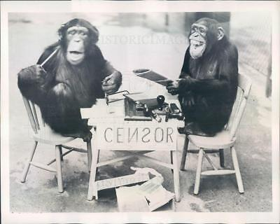 1939 Press Photo Chimpanzees Posing as Correspondent & Censor - ner62653