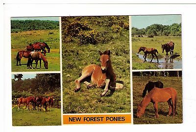 Postcard: Multiview - New Forest Ponies