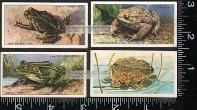 4 Vintage Frog and  Toad Trade Ad Cards 3
