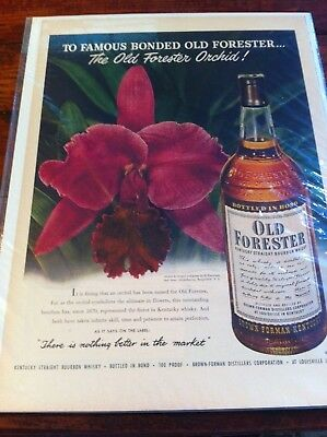 Vintage 1950 Old Forester Whiskey Purple Orchid Flower Print Art ad