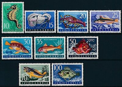 [ST64204] Yugoslavia 1956 Marina Life Good set of stamps very fine MNH Value 65$